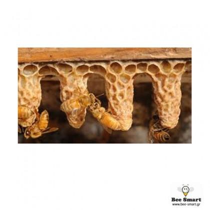 Βασιλικά κελιά by www.bee-smart.gr